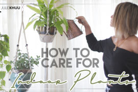 Know Your Roots | How to Care for Indoor Plants- the Basics