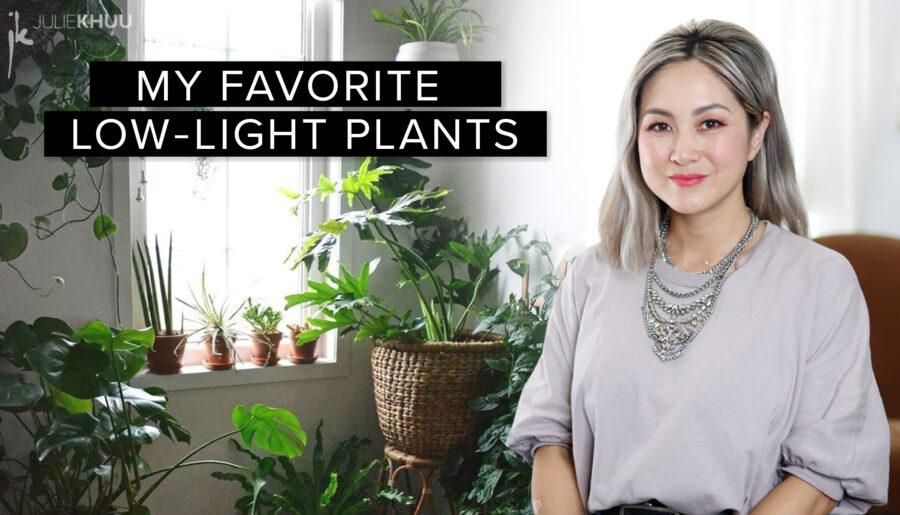 30 Favorite Low-Maintenance Low Light Plants + Styling Tips!